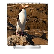 Adult Nz Yellow-eyed Penguin Or Hoiho On Shore Shower Curtain