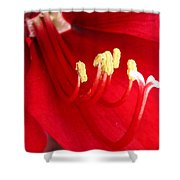 Amaryllis Named Black Pearl Shower Curtain