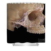 Anatomy Of The Skull Shower Curtain