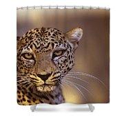 Arabian Leopard Panthera Pardus Shower Curtain