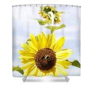 Bee On Flower Shower Curtain