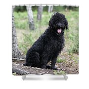 Black Labradoodle Shower Curtain