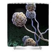 Black Mold Spores Shower Curtain
