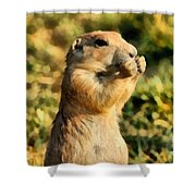 Black-tailed Prairie Dog Shower Curtain