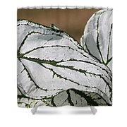 Caladium Named White Christmas Shower Curtain
