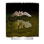 California Leaf-nosed Bat At Pond Shower Curtain