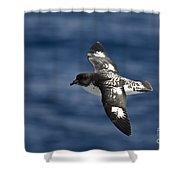 Cape Petrel Shower Curtain