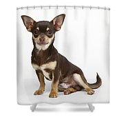 Chihuahua Dog Shower Curtain