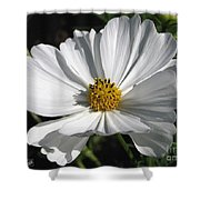 Cosmos Named Sensation Alba Shower Curtain