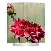 Dahlia Named Caproz Jerry Garcia Shower Curtain