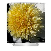 Dahlia Named Platinum Blonde Shower Curtain