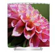 Dahlia Named Skipley Spot Of Gold Shower Curtain