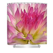 Dahlia Named Star Elite Shower Curtain
