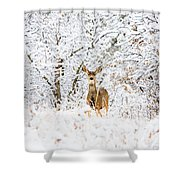 Doe Mule Deer In Snow Shower Curtain