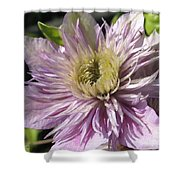 Double Clematis Named Empress Shower Curtain