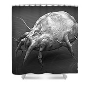 Dust Mite Shower Curtain