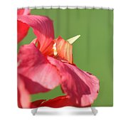 Dwarf Canna Lily Named Shining Pink Shower Curtain by J McCombie