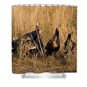 Eastern Wild Turkeys Shower Curtain