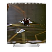 European Common Brown Frog Shower Curtain