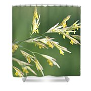Flowering Brome Grass Shower Curtain