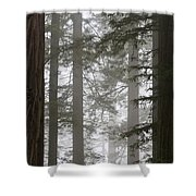 Foggy Coast Redwood Forest Shower Curtain