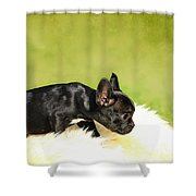 French Bulldoggs Shower Curtain