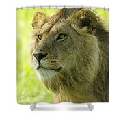 Golden Boy Shower Curtain