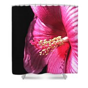 Hibiscus Named Luna Rose Shower Curtain