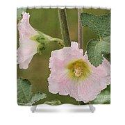 Hollyhock Named Indian Spring Pink Shower Curtain