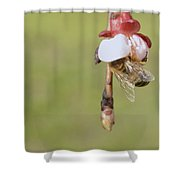 Honey Bee Collecting Nectar From An Apple Blossom Shower Curtain
