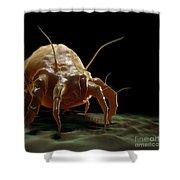 House Dust Mite Shower Curtain