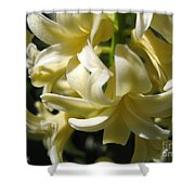 Hyacinth Named City Of Haarlem Shower Curtain