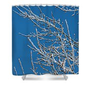 Ice Storm Poplars Shower Curtain