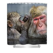 Japanese Macaques Shower Curtain