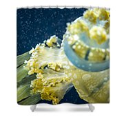 Jelly Fish Shower Curtain