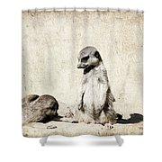 Meerkatz Shower Curtain