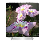 Morning Glory Named Pink Ensign Shower Curtain