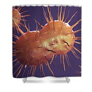 Neisseria Gonorrhoeae Bacteria Shower Curtain