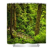 Path In Temperate Rainforest Shower Curtain