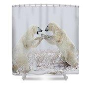 Polar Bears Play Fighting Along The Shower Curtain