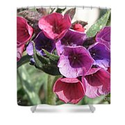 Pulmonaria Named Raspberry Splash Shower Curtain