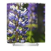 Purple Lupine Flowers Shower Curtain