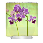 Purple Orchid-8 Shower Curtain