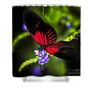 Red Heliconius Dora Butterfly Shower Curtain
