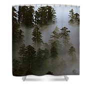 Redwood Creek Overlook With Giant Redwoods Sticking Out Above Lo Shower Curtain