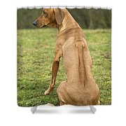 Rhodesian Ridgeback Shower Curtain