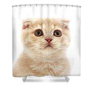 Scottish Fold Creme Shower Curtain