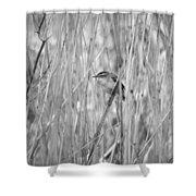 Sedge Warbler Shower Curtain