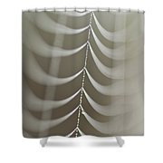 Spider Web With Dew Drops  Shower Curtain