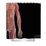 The Musculoskeletal System Shower Curtain